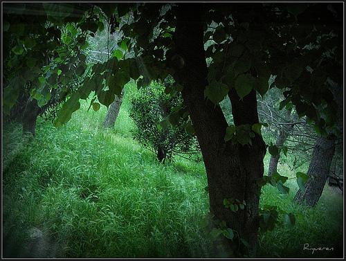 Incanto nel bosco